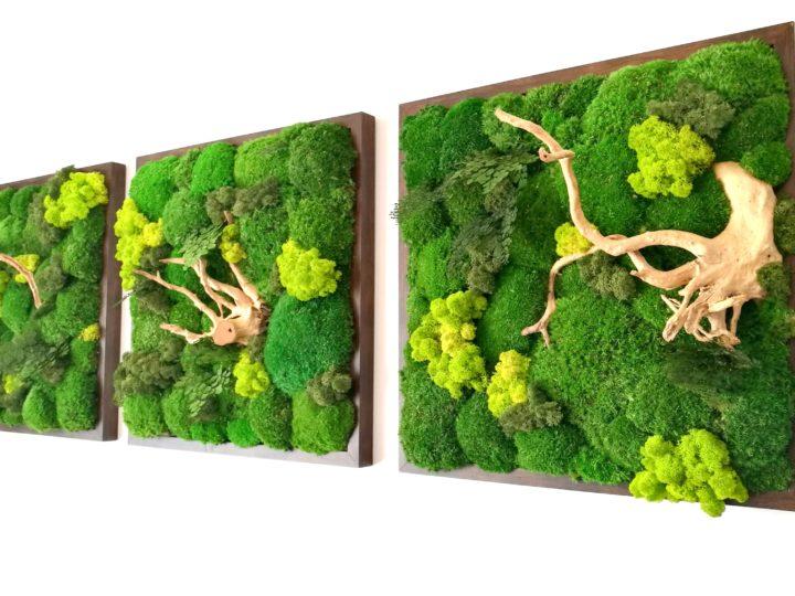 Trzy obrazy z zielonego mchu