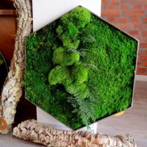 Obraz z mchu płaskiego heksagon