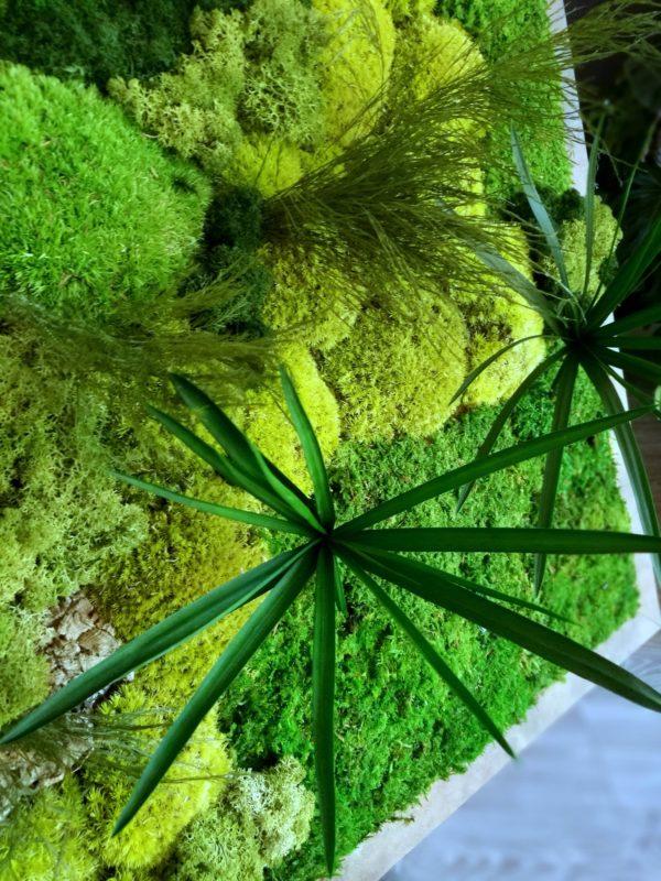 Obraz z mchu i roslin stabilizowanych