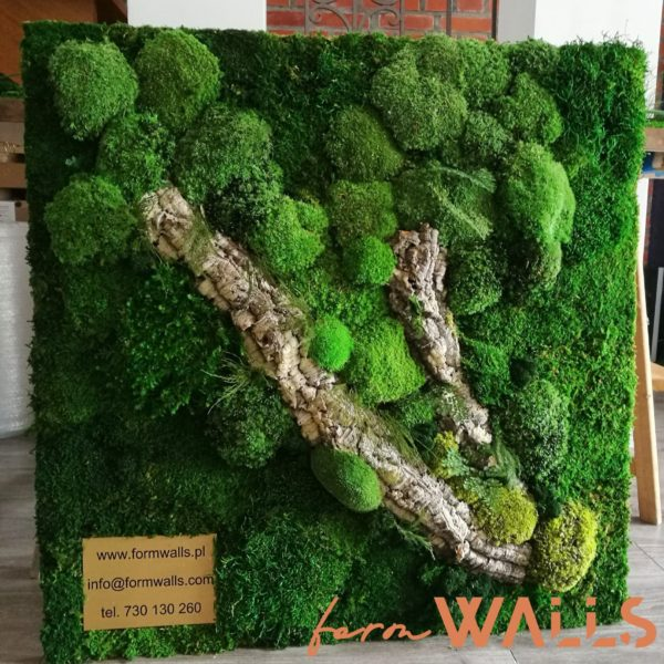 Zielony obraz z mchu i roślin stabilizowanych