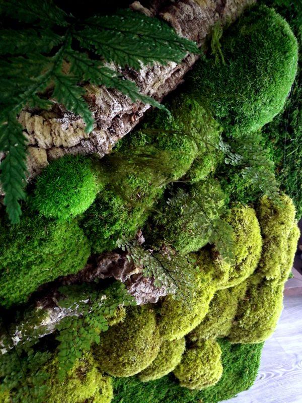 Rama Poszycie Leśne