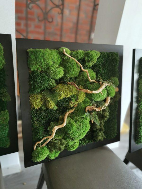 Obraz z mchów stabilizowanych 53 x 53 cm
